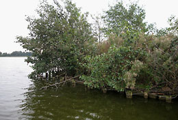 eiland reeuwijkse plas